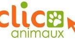 Clic animaux : aider les animaux abandonnés en un clic